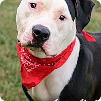 Adopt A Pet :: Loki - ADOPTED! - Zanesville, OH