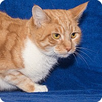 Adopt A Pet :: Connor - Elmwood Park, NJ