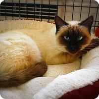 Adopt A Pet :: Little Cindy-Lou - Casa Grande, AZ