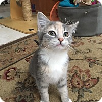 Adopt A Pet :: Lily Belle - Chicago, IL