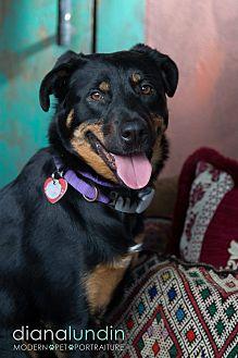 German Shepherd Dog/Rottweiler Mix Dog for adoption in Van Nuys, California - Maggie May