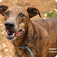 Adopt A Pet :: Maximus - Camden, DE