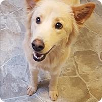 Adopt A Pet :: Clarisse - Fennville, MI