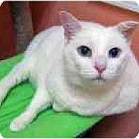 Adopt A Pet :: Crystal - Marietta, GA