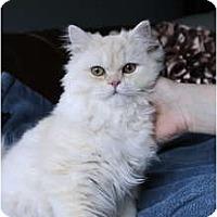 Adopt A Pet :: Sedona - Columbus, OH