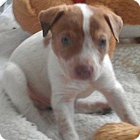 Adopt A Pet :: Rumplestiltskin - fairy tale - Phoenix, AZ