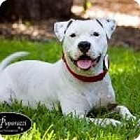 Adopt A Pet :: Buzz Lightyear - Orlando, FL