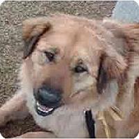 Adopt A Pet :: Billy - in Flagstaff - Scottsdale, AZ