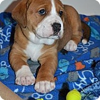 Adopt A Pet :: Kate - Brattleboro, VT