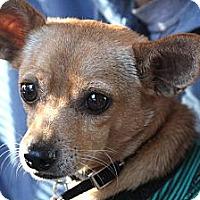 Adopt A Pet :: TACO - san diego, CA