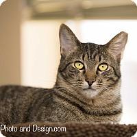 Adopt A Pet :: Tigger - Fountain Hills, AZ