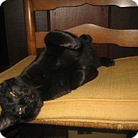 Adopt A Pet :: Davy - Alexandria, VA