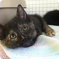 Adopt A Pet :: Cupcake - Bensalem, PA