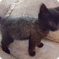 Adopt A Pet :: Drew - Berkeley Hts, NJ