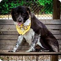 Adopt A Pet :: Ella Fitzgerald - Austin, TX