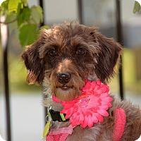 Adopt A Pet :: KayKay - Baton Rouge, LA