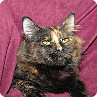 Adopt A Pet :: Trisha - Red Wing, MN
