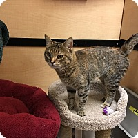 Adopt A Pet :: Chessie - Riverside, CA