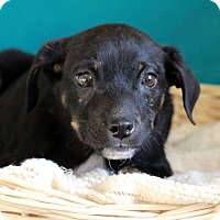 Adopt A Pet :: Ken - Waldorf, MD