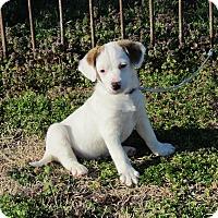 Adopt A Pet :: SLOAN - Hartford, CT