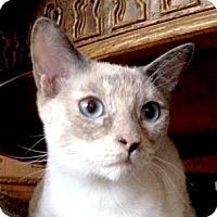 Adopt A Pet :: Ling Ling - Woodland Hills, CA
