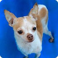 Adopt A Pet :: Ikey - Irvine, CA
