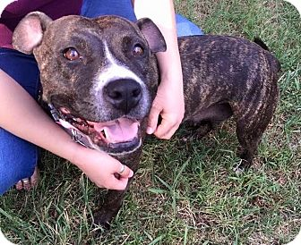 American Pit Bull Terrier Dog for adoption in Greensboro, North Carolina - Ruby