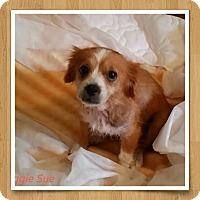 Adopt A Pet :: Maggie Sue - Weeki Wachee, FL