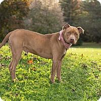 Adopt A Pet :: Norman - Flint, MI