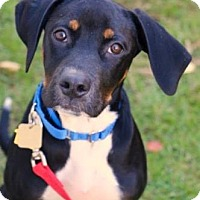 Adopt A Pet :: Roscoe - Chester Springs, PA
