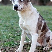 Adopt A Pet :: Xylon - Waldorf, MD