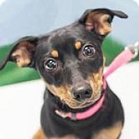 Adopt A Pet :: Lucy - Bellbrook, OH