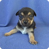 Adopt A Pet :: Willow - Lawrenceville, GA