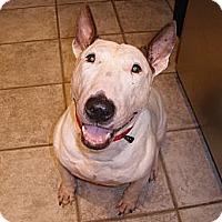 Adopt A Pet :: Princess Buttercup/Kenzie - Sachse, TX