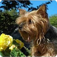 Adopt A Pet :: Rosette - Rigaud, QC