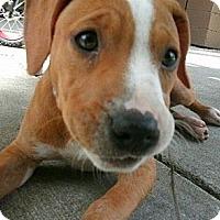 Adopt A Pet :: Ruby - Roaring Spring, PA