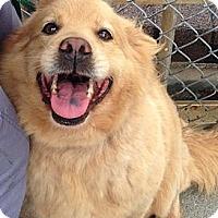 Adopt A Pet :: Hazel - Foster, RI