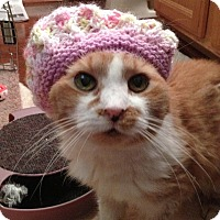 Adopt A Pet :: Foxy **foster care** - Philadelphia, PA