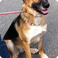Adopt A Pet :: ELLIE~COURTESY POST! - North Vancouver, BC
