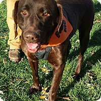 Adopt A Pet :: Grizzly - Staunton, VA