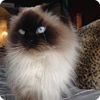 Adopt A Pet :: Valentina - Columbus, OH