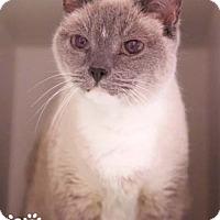 Adopt A Pet :: Tinkerbell - Merrifield, VA