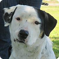 Adopt A Pet :: Angie - Turlock, CA
