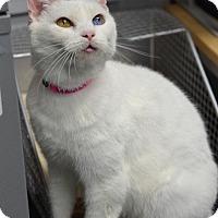 Adopt A Pet :: Coconut141185 - Atlanta, GA