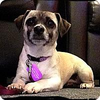 Adopt A Pet :: Thelma - Johnson City, TX
