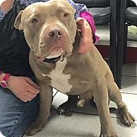 Adopt A Pet :: Charlie - West Los Angeles, CA