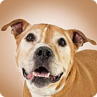 Adopt A Pet :: Bruno - Prescott, AZ