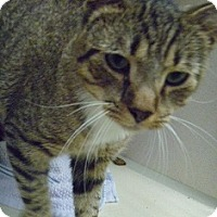 Adopt A Pet :: Lorenzo - Hamburg, NY