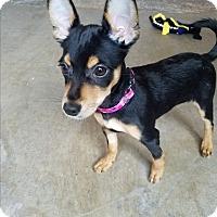 Adopt A Pet :: Avalon - Seattle, WA