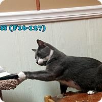 Adopt A Pet :: Jeff - Tiffin, OH